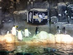 Pittsburgh Penguins, of course!
