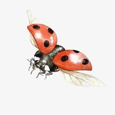 Lady Bug Drawing, Bugs Drawing, Fly Drawing, Painting & Drawing, Ladybird Drawing, Lady Bug Tattoo, Watercolor Animals, Watercolor Paintings, Photo Coccinelle