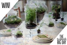 Win a terrarium from flora! Prize winners drawn all day! (Items pictured are examples of the artists' work and may differ from actual prize offered at the fair.)