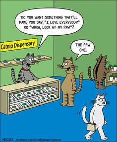 More of Scott Metzger's Cartoon Comics That Will Have You Laughing For Hours Comics) - Katzenrassen Beautiful Cats Comics Und Cartoons, Cat Comics, Funny Cartoons, Funny Comics, Funny Shit, Funny Cute, Hilarious, Super Funny, Cat Jokes