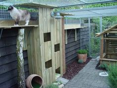 Catio with tunnel stairs too! #cats #Catio