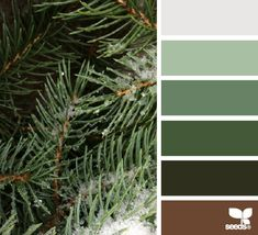 winter greens - design seeds