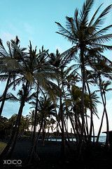Black Sand Beach, Kona Hawaii.