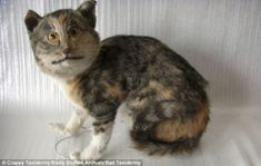 Here, kitty: This wonky cat went way out of proportion, ending up with a swollen head and sewn up mouth #BadTaxidermy