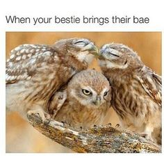 Best Collection Of Funny Owl Photos - World's largest collection of cat memes and other animals Cute Animal Tattoos, Cute Animal Quotes, Cute Animal Drawings, Funny Animal, Owl Photos, Owl Pictures, Cute Animal Pictures, Animal Pics, Memes Do Harry Potter