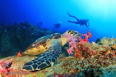 Phuket Dive Sites - Phuket and Southern Thailand Diving Points