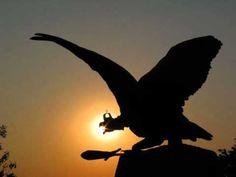 Flocking, Ancient History, Homeland, Bird Feathers, Godzilla, Bali, Hungary, Bald Eagle, Birds