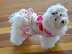 Vestido para perritas coquetas, Modelo Corazones, encuéntralo en www.toutmignon.net Ropa y accesorios exclusivo para mascotas con estilo.