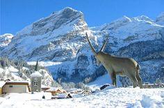 Pralognan-la-Vanoise, familial