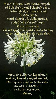 Amen Afrikaanse Quotes, Goeie More, Blessed Quotes, Faith Hope Love, Scripture Verses, Bible, God Is Good, True Words, Positive Thoughts