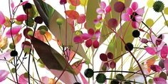 herbarium branches by kapitza