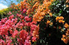 Jardin tropical nouméa | Crédit -