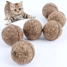 Pet Cat Ball Toy 20g 3cm Diameter Catnip Ball Pets