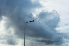 Valk rustend op een lantaarnpaal