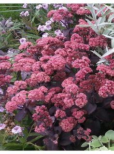 14 Best Kiehl Plants Images Plants Garden Landscaping Plants