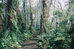 Enjoy an unforgettable guided hike in Monteverde! Our guides keen eyes are trained to find those amazing creatures that inhabit the cloud forest but are hard to spot through the dense vegetation, and feel free to ask any and all questions you may have! 🌿 🔍 Monteverde, Wildlife, Hiking, Creatures, Lovers, Clouds, Train, This Or That Questions, Eyes