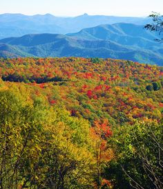 #Fallcolor in the NC mountains near Grandfather Mountain and the Blue Ridge Parkway.