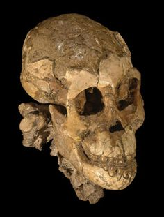 Nature identified the fossil remains - the oldest and most complete infant skeleton found to date - as those of a three-year-old girl who lived 3.3 million years ago. She belongs to the species Australopithecus afarensis, of which the iconic adult skeleton, nicknamed 'Lucy', is also a member.