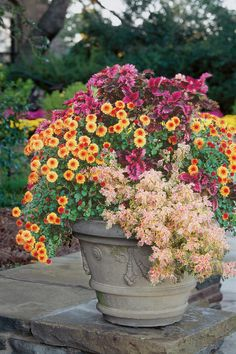 Cheery Chrysanthemums - Best Ideas for Fall Container Gardening - Southernliving. Nothing ushers in autumn like mums. Slip them between the coleus from your summer pots for a big show of color.