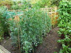 High garden yield
