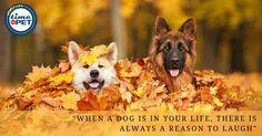 Man's Best Friend.  #timeforpet #dogs #dogquotes #doglove #dogcare #petquotes #animallovers #animals #animallove #quotes #animalquotes #quoteoftheday #petcare #petlove #pet #pets #bangalore #friday