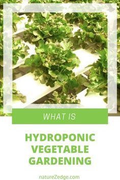 Indoor Hydroponic Gardening, Hydroponic Vegetables, Hydroponic Grow Systems, When To Plant Vegetables, Growing Vegetables, Hydroponics, Apartment Vegetable Garden, Vegetable Garden For Beginners, Backyard Vegetable Gardens