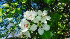 Beautiful spring things...❤