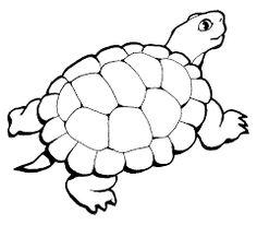 Afbeeldingsresultaat voor schildpad