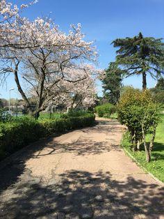 Springtime in Rome!