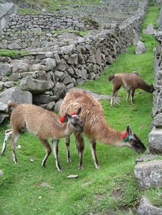 Mur en pierre à Machu Picchu - Peru
