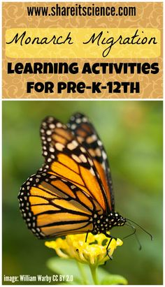 Share it! Science News : Monarch Migration, Ideas for butterfly activities for kids Science Activities For Kids, Steam Activities, Preschool Science, Science Experiments Kids, Science News, Insect Activities, Science Writing, Spring Activities, Monarch Butterfly Migration