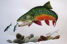 Brook Trout Paintings   Brook Trout Painting
