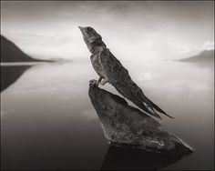 Mysterious Natron-Lake fossilized animals in creepy statues!