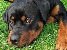 A kutya tanítása, nevlése - Mindent amit a kutyákról tudni akarsz. Itt megtalálod! Legyen ez nevelés, tanítás, vagy bármi más