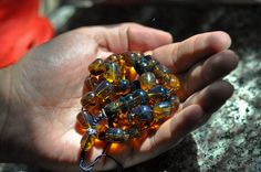 Amber is popular in European region as well as all over the world. Amber Gemstone, Amber Beads, Gemstone Jewelry, Amber Fossils, Blue Amber, Blue Green, Beaded Bracelets, Private Jets, Luxury Yachts