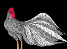 Roosters are chickens, too. :)