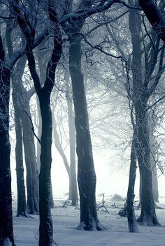 Winter in the woods | byAndrew Kearton.