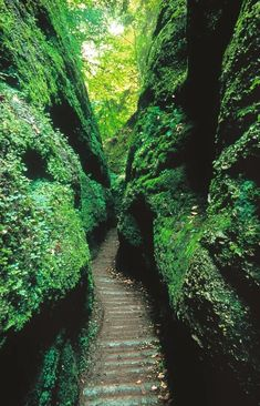 Passage Secret, Travel Around The World, Around The Worlds, Forest Scenery, Germany And Italy, Rafting, Trekking, Places To See, Travel Destinations