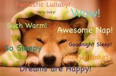 Cozy Doge Nite Wow