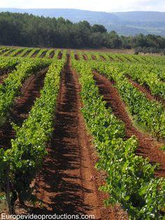 Des vignobles dans le Luberon en Provence, en France