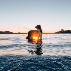 Interview: Help Photographer Andrew Knapp Find His Hiding Border Collie Momo - My Modern Met
