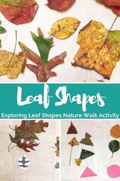 Exploring leaf shape