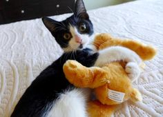 Meet Izzy, an adoptable little girl looking for a forever home.