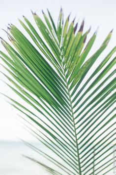 Sofitel Bora Bora Marara Beach Resort Olivia Poncelet Paradise Travel Sea Pastel Dream exotic plant