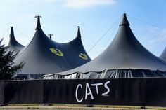 1000+ images about Cats on Pinterest   Cats musical ...