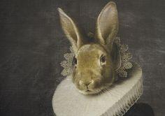 Selges på Hjem Kjære Hjem Rabbit, Animals, Bunny, Rabbits, Animales, Animaux, Bunnies, Animal, Animais