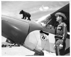 The original Smokey Bear, an orphaned black bear cub was rescued from a forest fire with singed hair and burned feet by firefighters and flown to treatment by NM game officer-pilot Ray Bell in Black Bear Cub, Us Forest Service, Wildland Firefighter, Smokey The Bears, Bear Cubs, Grizzly Bears, Tiger Cubs, Tiger Tiger, Bengal Tiger
