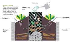 keyhole veggie garden: compost at the center means the bed gets fertilized every time you water