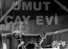 """Umut çay evi"" (Sala da te' della speranza - Hope Tea House). Però era chiusa da tempo. #Tarlabaşı #Istanbul #turkish cats"