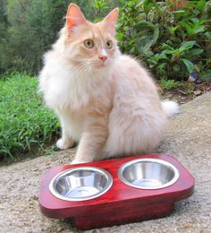 Handmade Cat Feeder   2 stainless steel 1/2 Pint by WoodyToolWorks, $22.50
